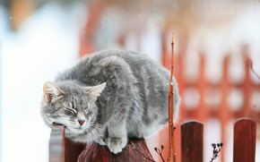 Picture cat, cat, branches, the fence, bokeh