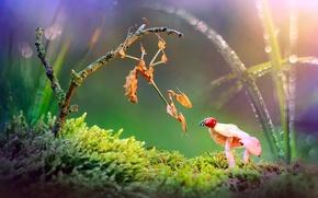 Wallpaper mushrooms, grass, glare, Rosa, beetle, bokeh, moss, macrocosm, ladybug, mantis, light, branch
