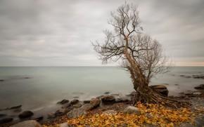 Picture sea, autumn, tree, shore