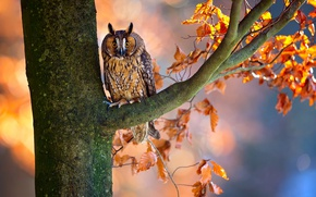 Wallpaper autumn, branches, owl, bird, foliage, tree