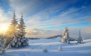 Picture winter, forest, snow, nature, tree, forest, nature, winter, snow, fir trees