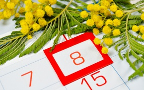 Picture yellow, red, calendar, March 8, flowers, number, date, Mimosa, women's day