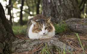 Picture forest, cat, look
