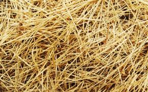 Wallpaper straw, grass, macro