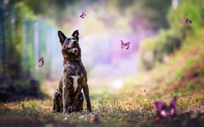 Picture butterfly, dog, bokeh