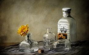 Picture flower, glass, bottle, dishes, tube, still life