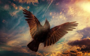 Picture the sky, nature, bird
