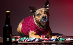 Picture bottle, dog, chips, sweater, player
