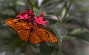Picture flower, macro, butterfly, wings, moth