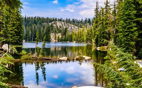Picture Nature, Landscape, Spruce forest