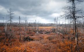 Picture Canada, Quebec, national park of the Mingan archipelago