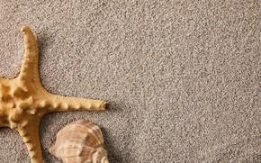 Picture sand, summer, nature, shell, starfish