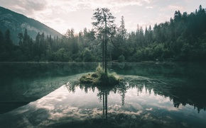 Wallpaper forest, the sky, nature, lake, tree