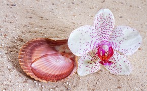 Picture flower, shell, Orchid
