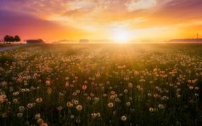 Wallpaper sunset, summer, fog, nature, dandelions, field, light