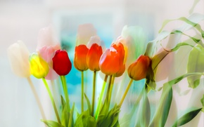 Picture flowers, color, tulips
