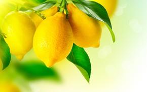 Wallpaper fruit, leaves, yellow, lemon, macro