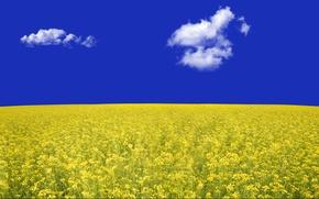 Picture field, the sky, rape