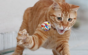 Picture cat, the game, red, the ball, foot, red cat