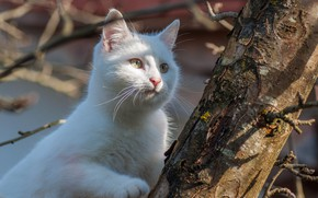 Picture white, cat, tree
