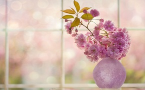 Picture cherry, sprig, Sakura, vase, flowering, flowers