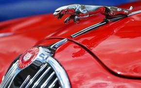 Picture macro, red, Jaguar, Jaguar MK2