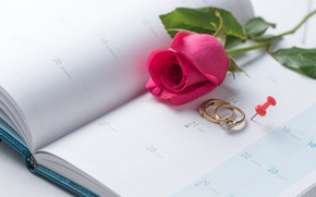 Wallpaper holiday, rose, ring, Valentine's day, the indicators