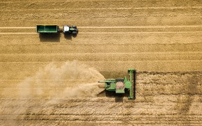 Wallpaper cleaning, the trailer, tractor, harvest, field, harvester