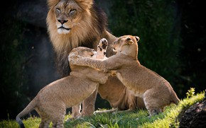 Picture the game, Leo, the cubs, family