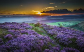 Picture sunset, flowers, mountains, nature, meadow, pasag