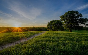 Picture field, trees, sunset, England, Kent, path, England, Kent