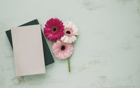 Picture Flowers, leaves, Notepad, Gerbera