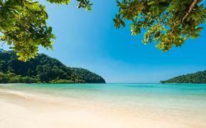 Picture sea, beach, summer, trees, nature, tropics, stay, summer, beach, trees, sea, nature, blue water, tropics, …