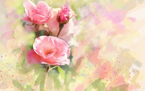 Picture flower, flowers, background, figure, graphics, rose, roses, treatment, light, picture, art, pink, painting, buds, gently, …