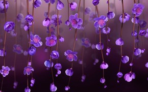 Picture light, background, stems, spring, petals, stamens, buds, picture, purple flowers