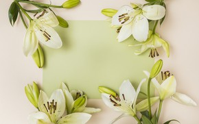 Wallpaper buds, white, Lily, flowers