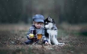 Picture autumn, nature, animal, Apple, dog, boy, scarf, baby, puppy, cap, child, husky