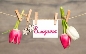 Wallpaper clothespins, pink, tulips, March 8, romantic, tulips, postcard, spring, flowers, flowers
