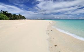 Picture sea, beach, tropics, palm trees, Nature