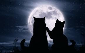 Wallpaper cats, night, the moon, romance, stars