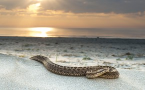 Picture sand, sea, beach, the sun, landscape, shore, snake, wildlife, reptiles
