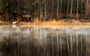 Picture forest, lake, house