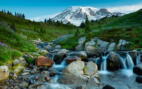 Picture greens, grass, trees, flowers, stream, stones, mountain, valley, USA, Mt Rainier National Park