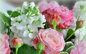Picture flowers, roses, buds, gillyflower