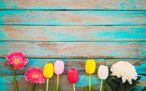 Picture flowers, spring, colorful, tulips, gerbera, wood, flowers, tulips, spring, gerbera, tender