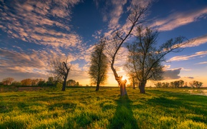 Picture the sky, grass, the sun, clouds, trees