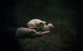 Picture background, skull, hand