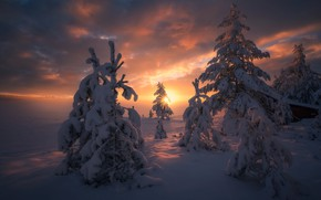Wallpaper winter, forest, snow, nature, the sun