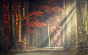Picture road, forest, trees, rays of light, leaves