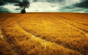 Picture field, landscape, nature